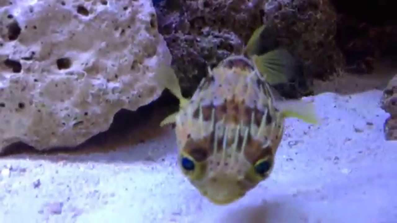 180 gallon aggressive salt water predator tank 2 youtube for Predatory freshwater fish