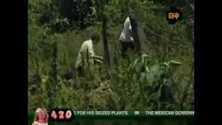 G4 Attack of the Show! - 420 Jamaican Special - 2008