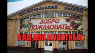 Полюстровский ПТИЧИЙ рынок   СНИМАТЬ ЗАПРЕЩЕНО   УЖАС!   Издевательство над животными