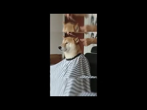 Pets Funny Videos 😂 Dogs🐕 and cats🐅 Funniest - Funny Awesome Pet Animals Videos
