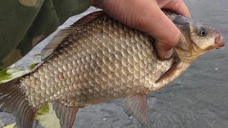 МЕГА КЛЁВ КАРАСЯ Душевная РЫБАЛКА на ПОПЛАВОК в сентябре