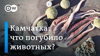 Камчатка: что на самом деле погубило морских животных, или Экологическая катастрофа в Тихом океане