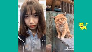funny cats doing things!