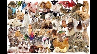 Животные занесенные  в красной книге