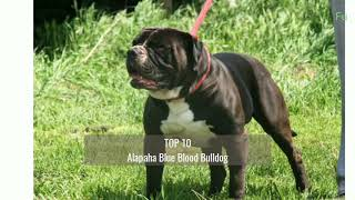 Top 10 Guard Dog Breeds