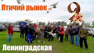 Птичий рынок. Ленинградская. Часть 1. [09.05.2021]