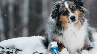 Dogs With Anxiety: Symptoms & Treatment