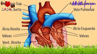 Corpo aos como do oxigênio chega o tecidos