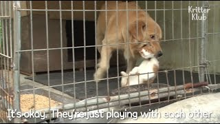 Who Says Cats And Dogs Can't Be Best Friends? | Kritter Klub