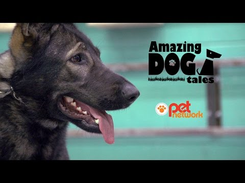 Amazing Dog Tales | Dogs at Work