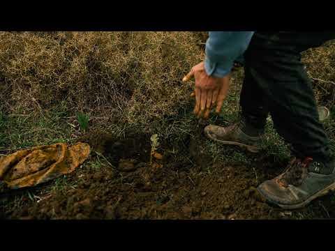 Meşe Ormanları-Fidan Dikimi