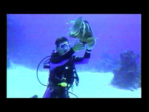 Underwater Explorer   Diving Bahamas and Little Cayman