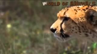 Подборка лучших моментов из жизни дикой природы [Разное]