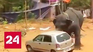 Разгневанный шумом слон разогнал городской праздник