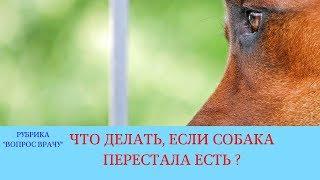 26.01.18 Собака не ест и стала менее активной
