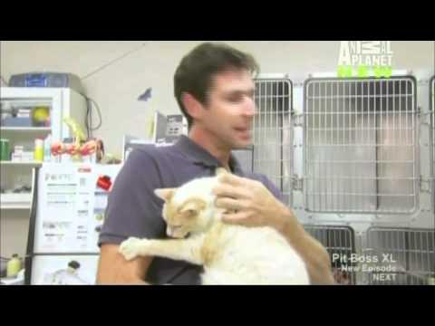 TC on Animal Planet