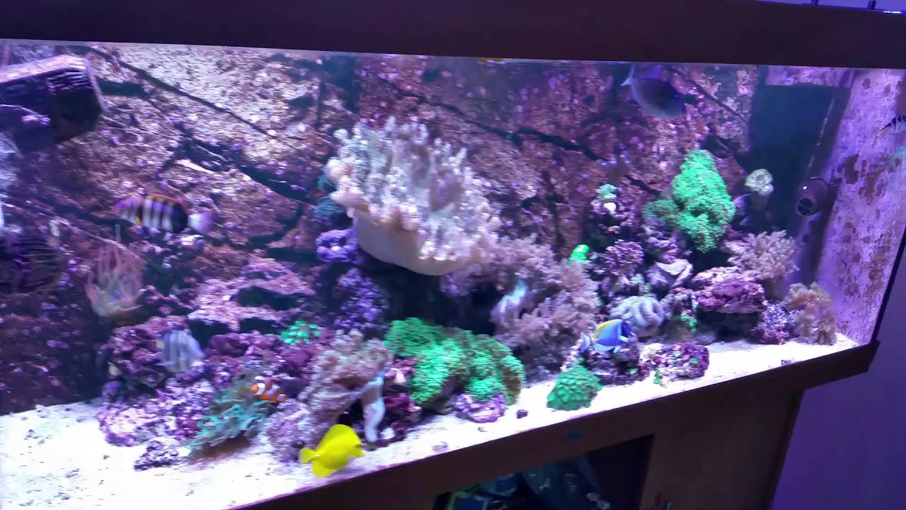 juwel rio 400 reef tank youtube. Black Bedroom Furniture Sets. Home Design Ideas