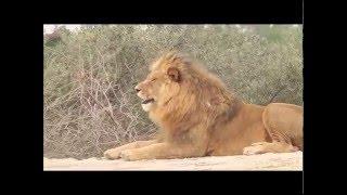 Reserva Africana Sigean 🐇🌈