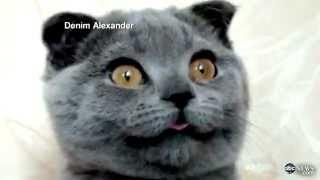 Кошка Ксения покорила Интернет