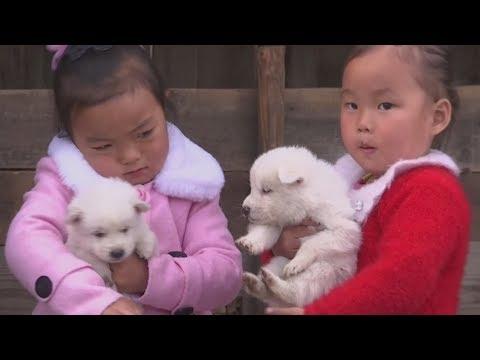 За что северокорейцы любят собак породы пхунсан