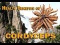 HEALTH BENEFITS OF CORDYCEPS