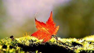 ❤♫ Nana Mouskouri - Autumn Leaves 秋葉