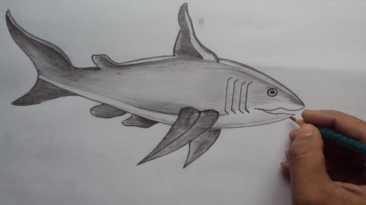 How to draw a shark how to draw a great white shark with pencil shade youtube