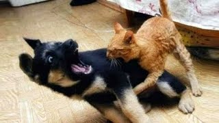 고양이 vs 개 싸움의 승자는  가장 웃긴 고양이 영화 ㅋㅋㅋ