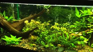 tank update one month of co2 on my 55g added cheap lights