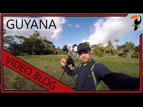 Video Blog - 3.5 Weeks in Guyana
