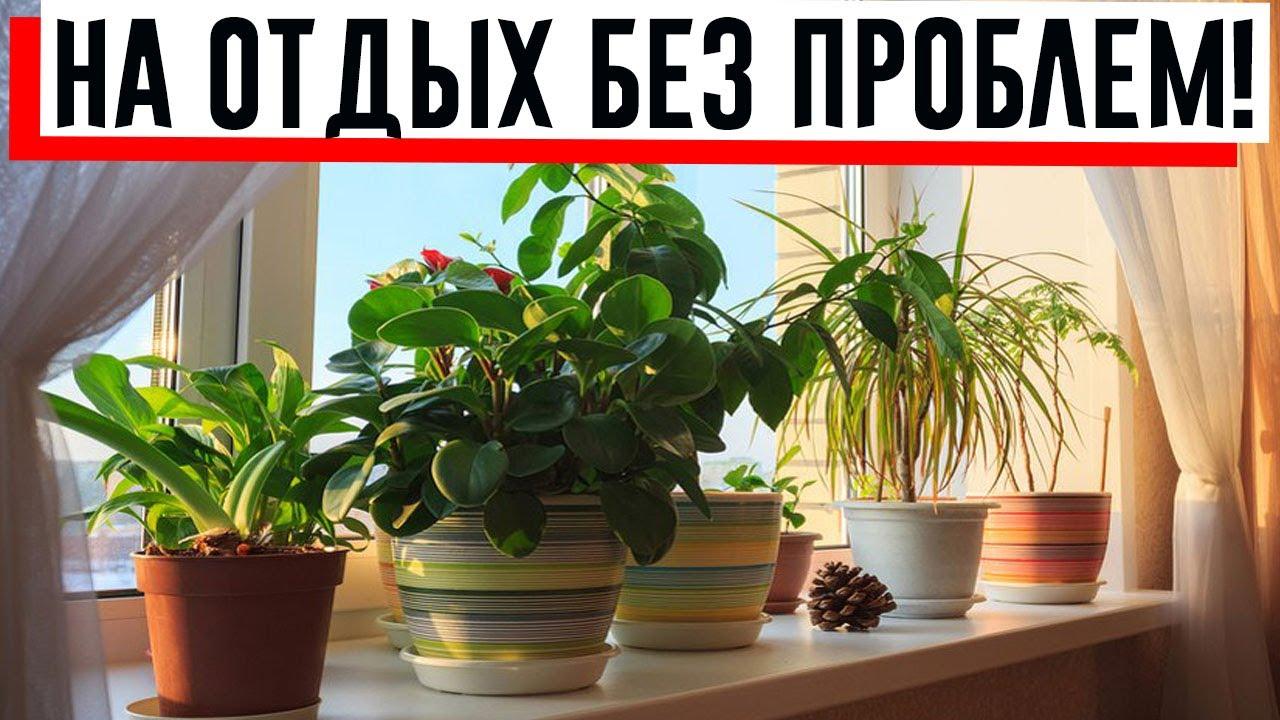 Советы для быта: как сделать, чтобы комнатные цветы не засохли!