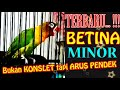 Masteran Lovebird Betina Minor Ampuh  Mp3 - Mp4 Download