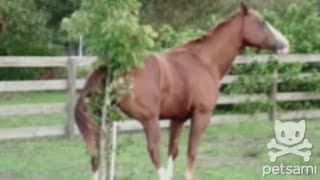 Horse itches his butt on a tiny tree