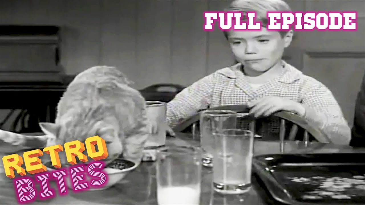 Download Lassie   Cat That Came To Dinner   Full Episodes