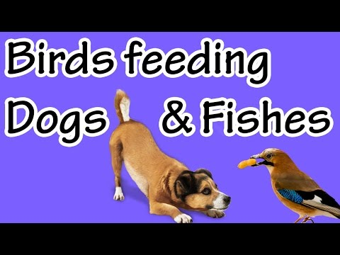 Birds feeding dogs and fishes
