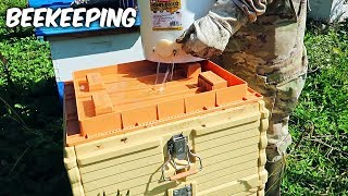 Best Sugar Syrup Feeder - Beekeeping