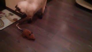 Огромная мышь атаковала Кузю!Кот против мышки(группа вконтакте https://vk.com/club98286617 ------------------------ Также кому интересно и кто любит и смотрит много фильмы, приг..., 2016-02-06T09:25:05.000Z)