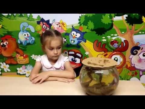 Стадии развития лягушек Познавательное видео для детей