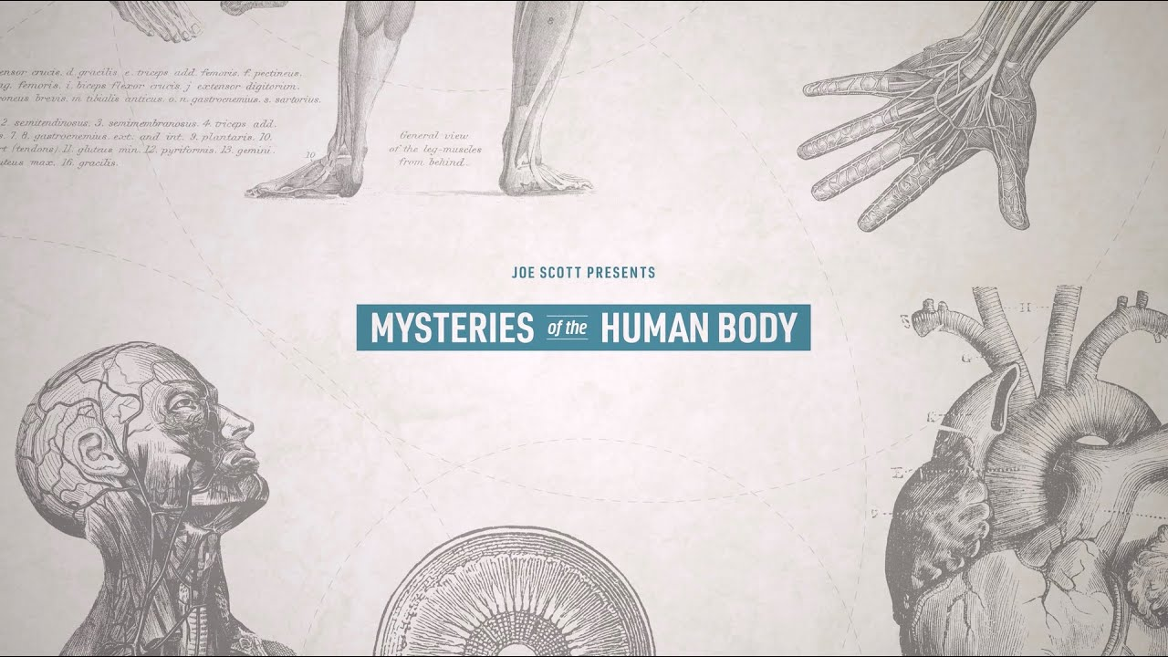 Nebula Original Series Mysteries Of The Human Body – Teaser
