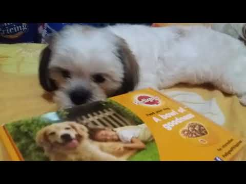 Unboxing The Free Goo From Pedigree Philippines Shih Tzu