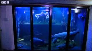Bbc News   Nottingham Fish Tank Man Dreams Of Big Aquarium Job