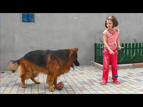 Большая овчарка ебет свою хозяйку