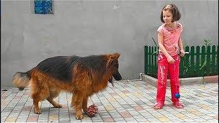 Смелая девочка и немецкая овчарка Дольф. Brave girl and the big dog.