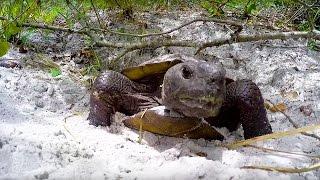 GoPro Awards: Headbanging Tortoise