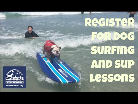 Dog Surfing Lessons - San Diego - Helen Woodward Animal Center