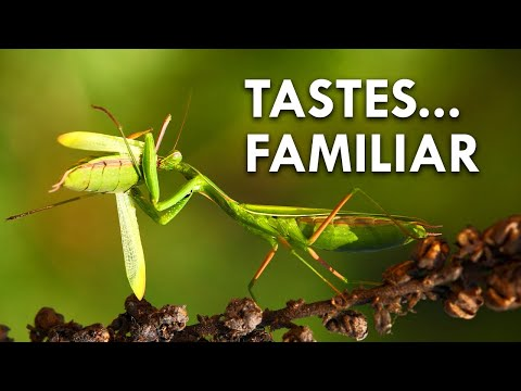 Cannibalism: These Animals Eat Their Own Kind