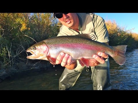 Truckee River Streamer Fishing East of Reno