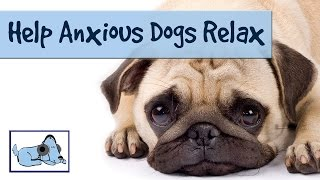 Listen Through A Dogs Ear - Music For Dogs To Help Them Relax From Anxiety And Stress