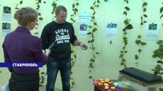 Гиганты в мире бабочек появились в Ставрополе