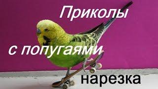 Нарезка приколов / Приколы с попугаями